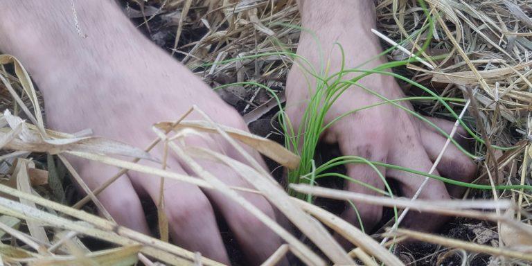 desenolvimento sustentável onu compostagem
