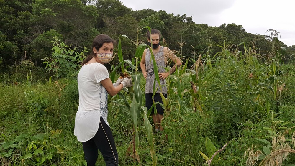 Laboratorio Terra Organica